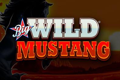 Big Wild Mustang